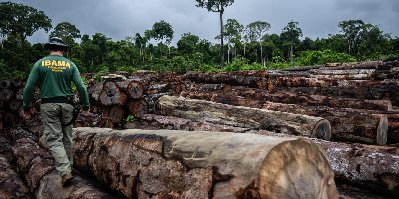 ibama deforestation