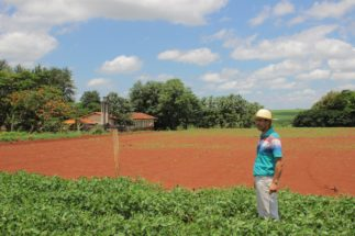 Paraguay soja