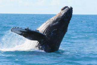 brazil marine biodiversity