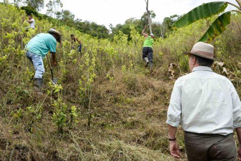 colombia glyphosate