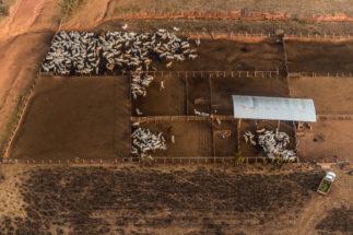 China Latin America beef Amazon deforestation