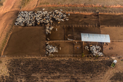 beef deforestation Amazon Brazil