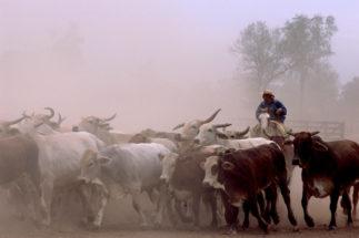 China and Paraguay could establish a beef trade