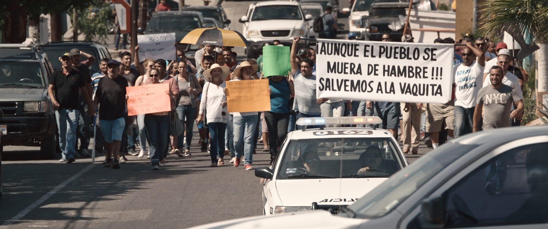 vaquita protest