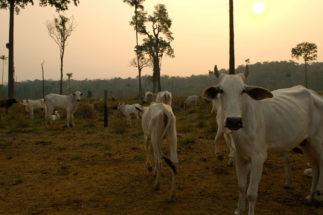 China Amazon beef
