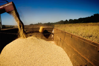 covid-19 soy logistics Brazil Argentina