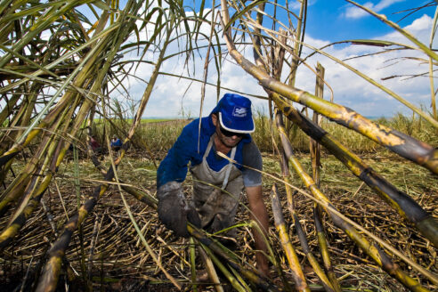Sugarcane cutters near Sao Paulo State Brazil, harvesting sugar cane for ethanol biofuel