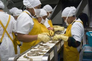 Ecuador camarones China