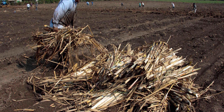 sugar El Salvador
