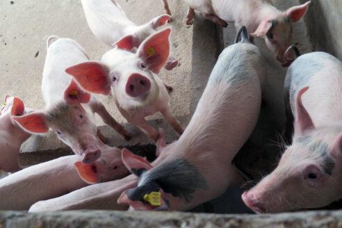 China Argentina Pork